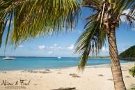plage et cocotier
