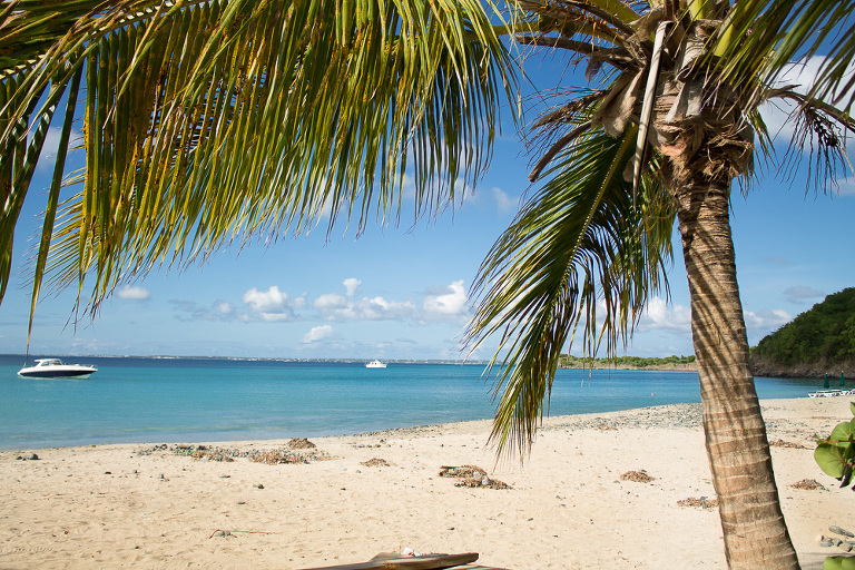 cocotier et sable blanc.