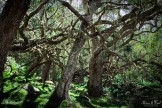 photo de la forêt de Mafate