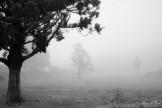 arbres dans la brume plaine des cafres
